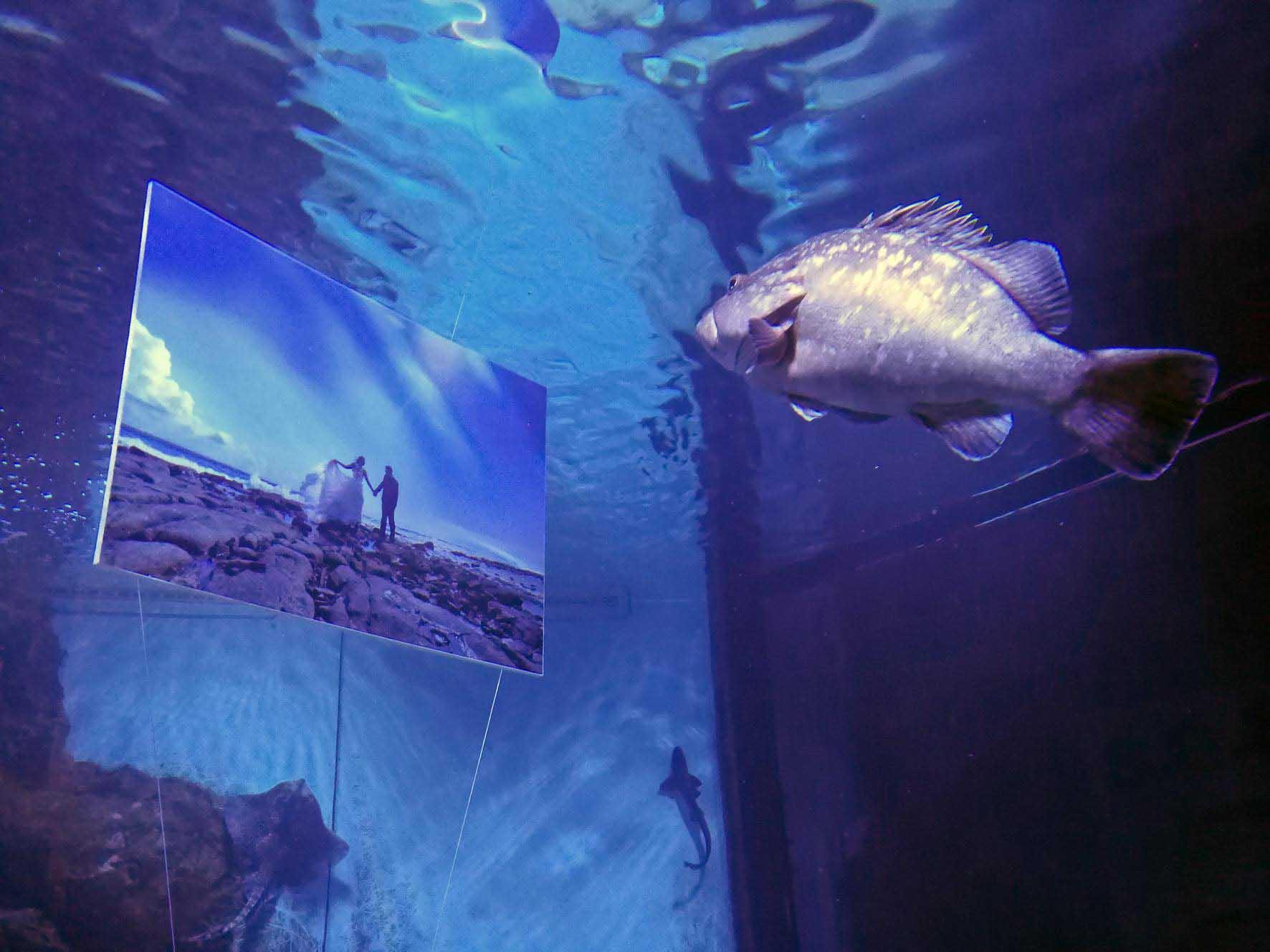 tijaraartnews_aquariumpula