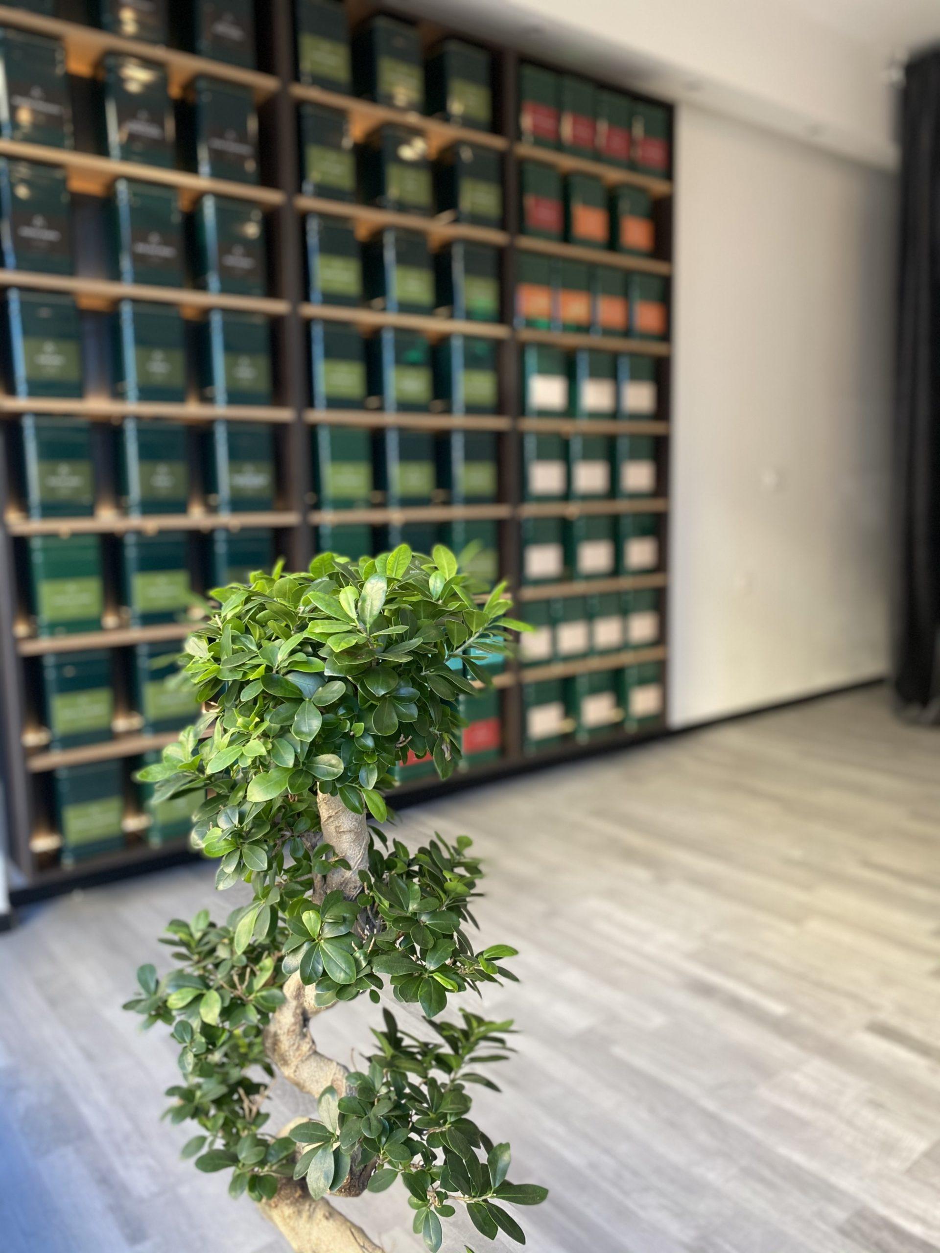 Dinastija Kuće zelenog čaja u Rijeci!