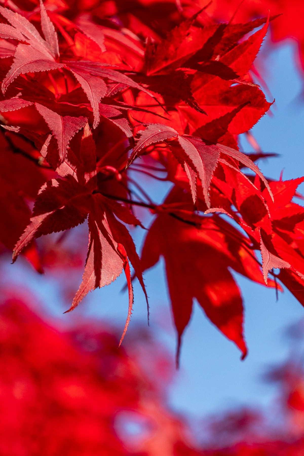 Dočekajte jesen uz Vrtni centar Viškovo